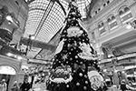 В московском ГУМе проходит ежегодная выставка новогодних елок и украшений. Она продлится до середины января (фото: Агентство «Москва»)