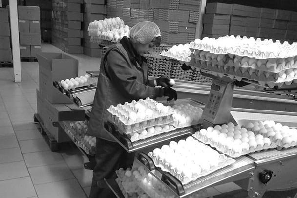 Сортировка яиц