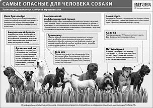 Самые опасные для человека собаки (нажмите, чтобы увеличить)