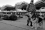 Знаменитая полицейская собака Лора будет помогать обеспечивать безопасность в аэропорту Сочи(фото: Reuters)