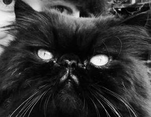Кот Скрипаля