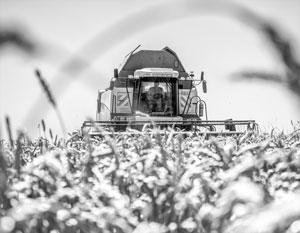 Глобальное потепление дает России в том числе огромные урожаи зерновых