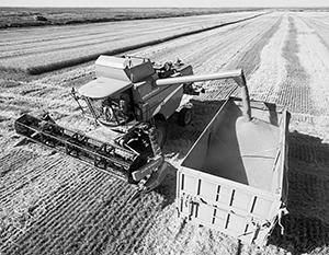 2019-й год вновь принес успехи российскому сельскому хозяйству