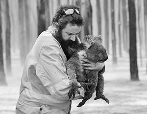 Символы Австралии – коала – стали одной из жертв крупнейших на континенте лесных пожаров