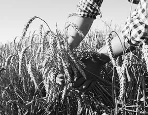 Россия вернет лидерство в экспорте пшеницы