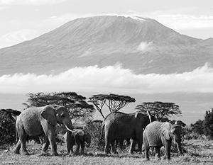 Танзания интересна для российских туристов и для российского бизнеса по нескольким причинам