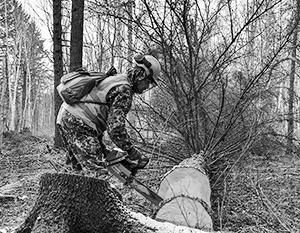 Те, кто работает по «теневым» схемам, до сих пор процветают в лесной отрасли России