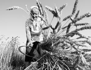 США недовольны тем, что Россия кормит мир хлебом