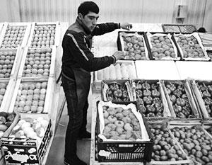 Треть ввозимых в Россию из-за рубежа помидоров – из Азербайджана