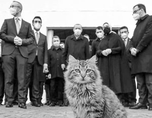 Эрдоган покоряет аудиторию Telegram при помощи котиков
