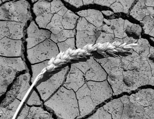 Потепление климата приведет к засухам в России