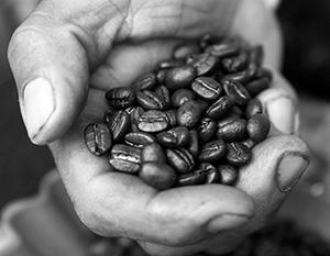 Мир оказался на пороге нехватки кофе
