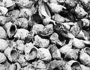 «Когда кушаю эти рапаны, я ищу, а где там песочек. Потому что в детстве было так – на зубах», – рассказал Зеленский