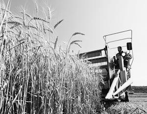 Российская пшеница стала менее желанной на внешних рынках