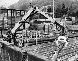 Главный довод за биотопливо: выбросы СО2 при горении древесины будут полностью компенсированы при выращивании новой