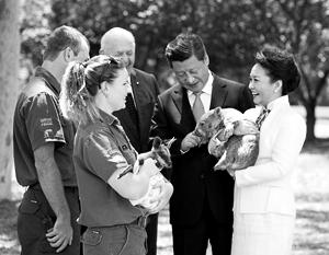 Председатель Си и генерал-губернатор Питер Косгроув всего четыре года назад вместе нянчили австралийских вомбатов