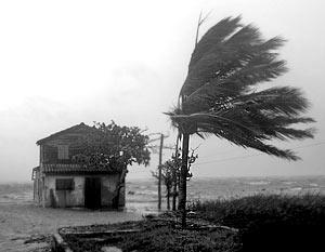 Мошенники заработали на урагане 1 млрд. долларов