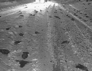 Ученые предложили толкование для гибели сразу 100 галок в Швеции