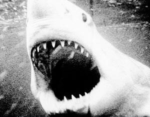 Акулы-убийцы расширяют ареал обитания на север