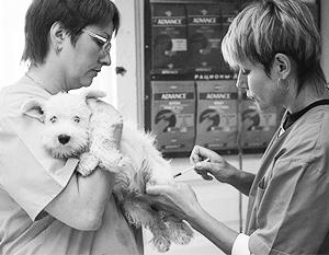 Одним из мест регистрации домашних животных могут стать ветеринарные клиники