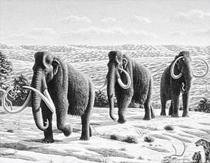 Если догадки ученых подтвердятся, мамонты смогут возродиться