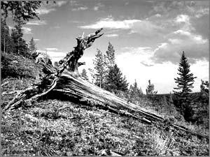 Что же на самом деле произошло 30 июня 1908 года на территории Центральной Сибири в междуречье Нижней Тунгуски и Лены