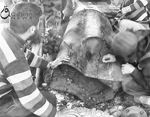 Неразорвавшаяся бочковая бомба – «страшное» оружие Асада