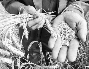 Почти идеальная погода и инвестиции обеспечат России рекордный урожай зерновых
