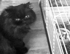 Кота Сергея Скрипаля усыпили – вместо того, чтобы дать ему время на адаптацию