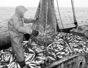Западные санкции решили целую серию проблем рыбной отрасли России