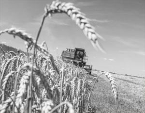 Зерно становится одним из главных экспортных товаров России