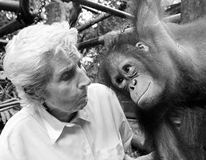 Перечень запрещает держать в домах гоминидов, к которым относятся как орангутаны, так и люди