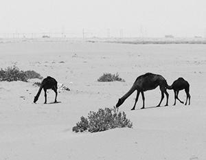 Нефть способна превратить пустыню в процветающий оазис, но на короткий срок