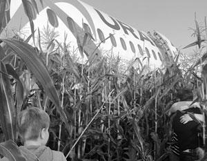 Командир самолета под Жуковским совершил чудо, посадив самолет в кукурузное поле