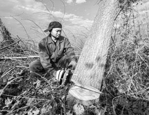 Российско-китайскую дружбу подтачивает проблема «черных лесорубов»