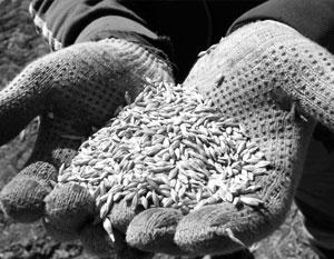 На Украине много зерна – но продать его оказалось не так-то просто