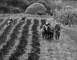 За отмену моратория на продажу сельскохозяйственных земель выступают только 31% украинцев
