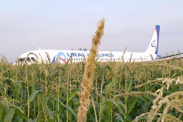 Самолет А321 авиакомпании «Уральские авиалинии» в четверг совершил экстренную посадку в кукурузное поле неподалеку от Жуковского из-за попадания в двигатели самолета птиц. Благодаря грамотным действиям пилотов 226 пассажиров и семь членов экипажа остались живы