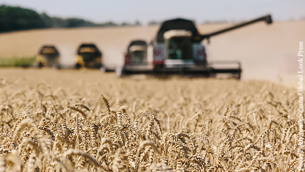 На Западе признали господство России на мировом рынке пшеницы