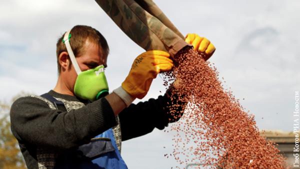 Производство собственных семян - стратегическая задача для России