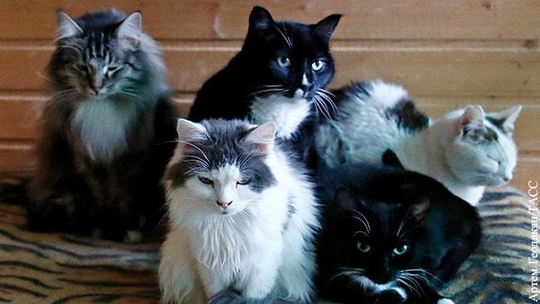 Член ОП предложил ввести работы в звериных приютах для хозяев выгнавших на улицу животных