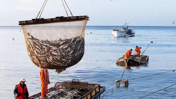 Россия и Украина согласовали квоты на вылов рыбы в Азовском море