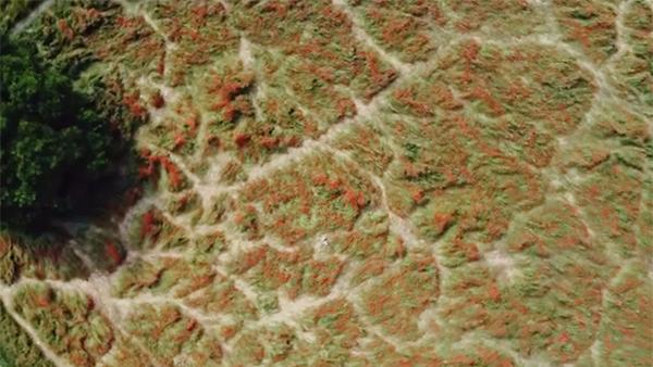 Блогеры вытоптали маковые поля под Краснодаром