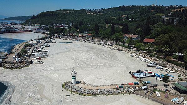 Берег Мраморного моря в районе Стамбула покрылся густой морской слизью. Турецкие ученые бьют тревогу, уровень кислорода в воде серьезно снизился. Разрастание слизи угрожает различным морским организмам, в том числе устрицам, мидиям и морским звездам