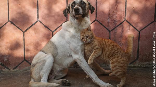В Госдуме разъяснили необходимость введения штрафов за жестокое обращение с животными