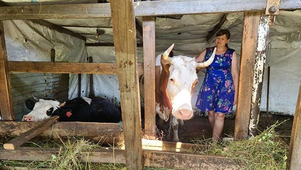 Олеся Тихонова и ее коровы – пример того, как социальный контракт помогает выйти из крайней бедности