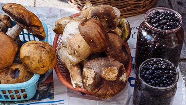 Миколог объяснил, как не отравиться купленными на рынке грибами