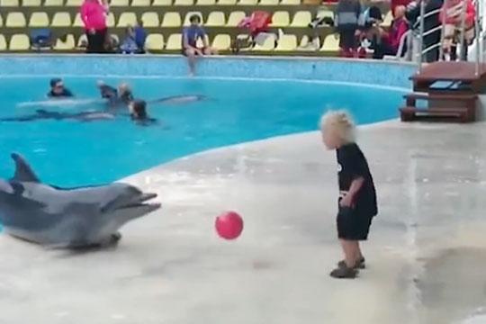 дельфин игровой