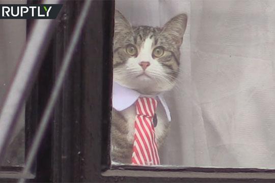 Эквадор потребовал от Ассанжа заботиться о коте
