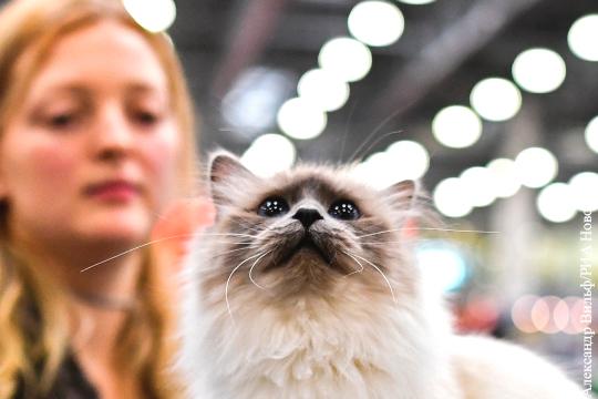 Названа самая популярная порода кошек у россиян